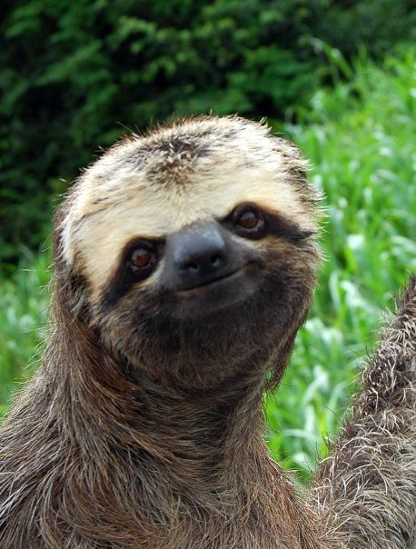d7cbcca4af5550047ddd75b62355a14d--sid-the-sloth-a-sloth
